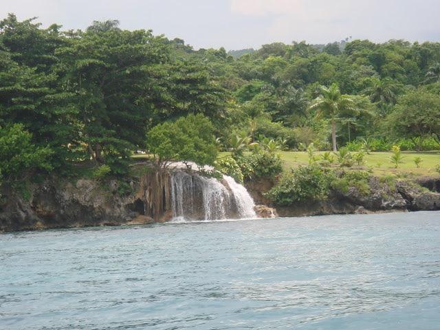 Delfines y besos en aguas jamaicanas América