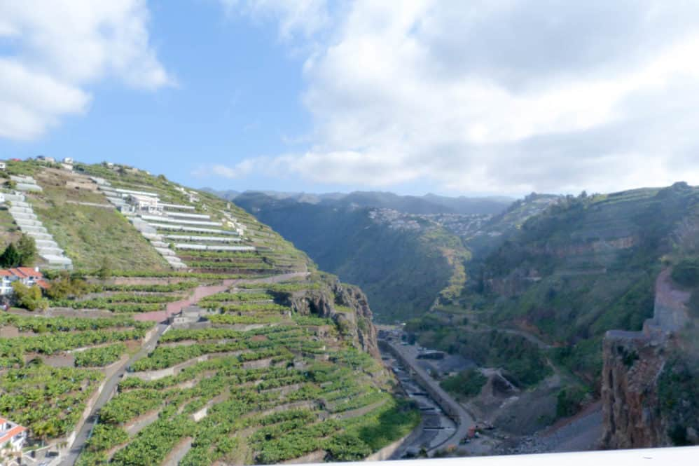 Feijoaon da galinha, en la Isla de Funchal e Madeira