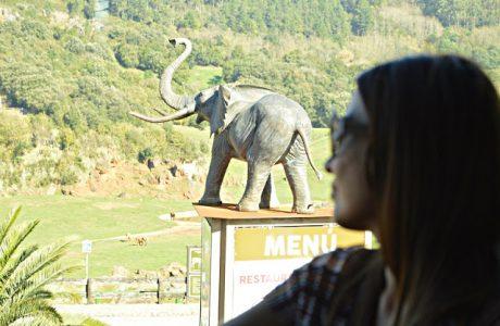 Restaurante los Elefantes en Cabárceno. ¡Genial para las familias! Cantabria