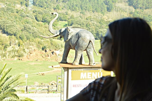 Porqué elegir Cabañas la Senda de los Elefantes en Cabárceno. Cantabria