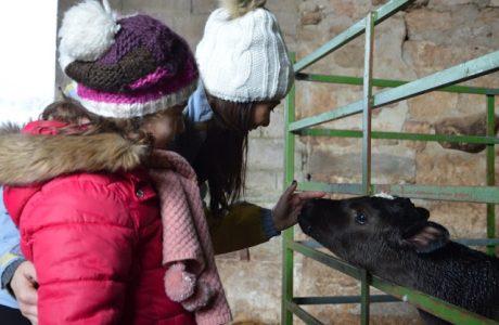 Un  increíble agroturismo en Cantabria para ir con los niños hoteles