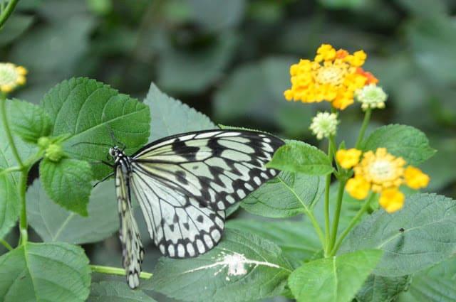 Butterfly Park en Empuriabrava