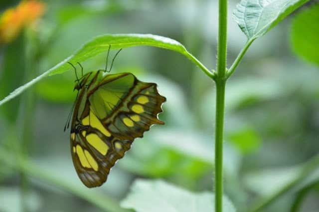 Butterfly Park . Bonita actividad en familia en Empuriabrava. Empuriabrava