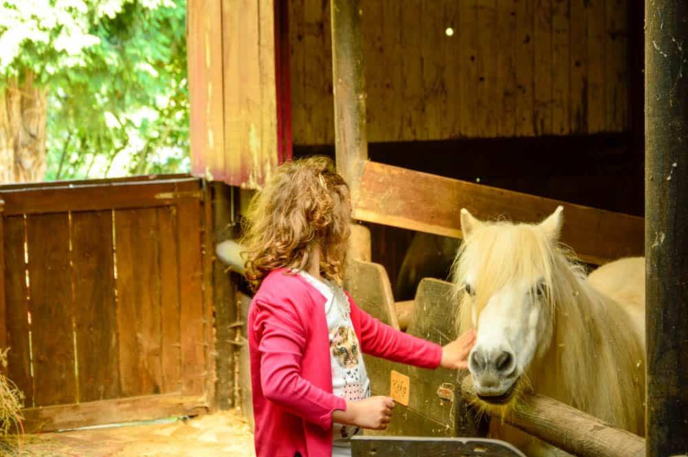 vacaciones-con-niños-familia-viajar-turismo-cantabria-carromatos-granjas