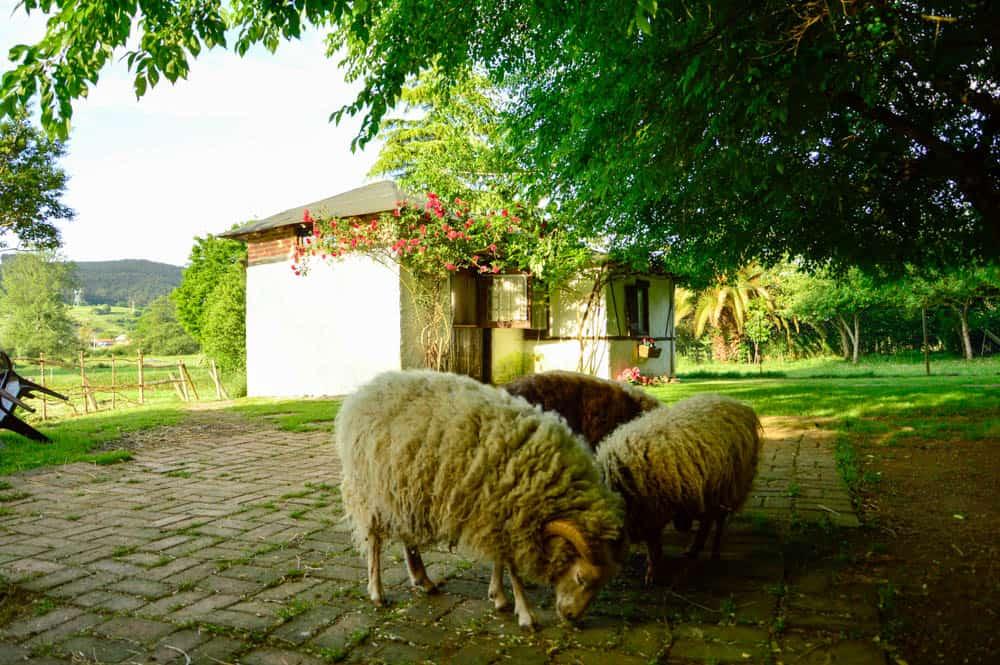 vacaciones-niños-cantabria-granja-carromatos-animales