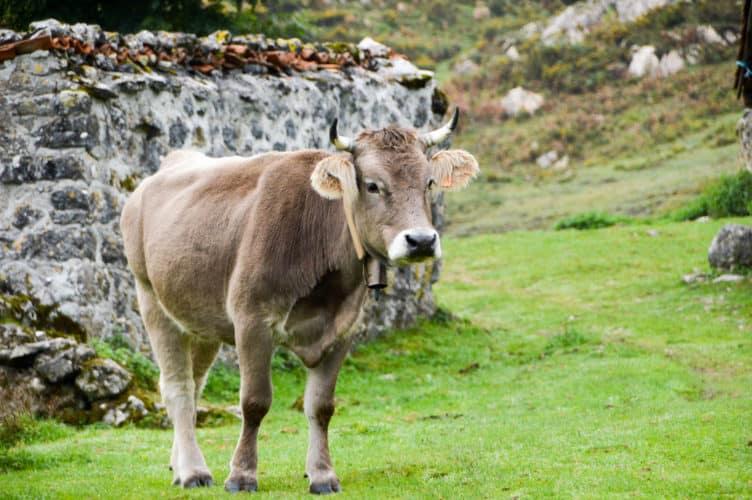Asturias-con-niños-viajar-a-asturias