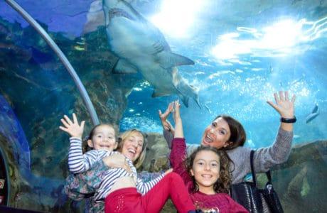 aquarium-de-donosti-con-los-niños-viajar-con-niños