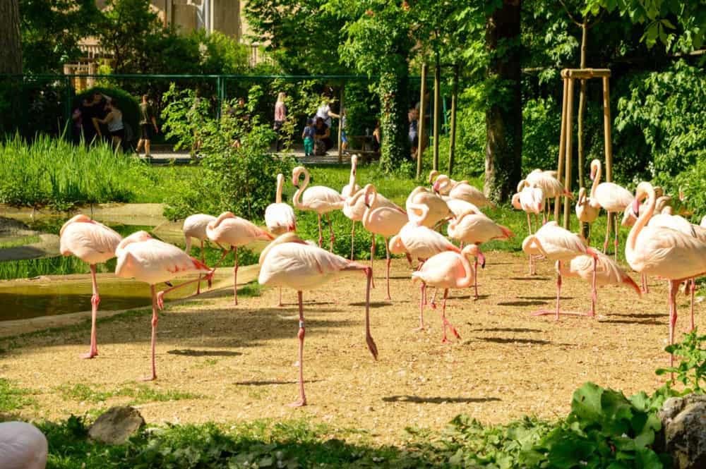 Zoológico de Schönbrunn. Viena con niños. Austria