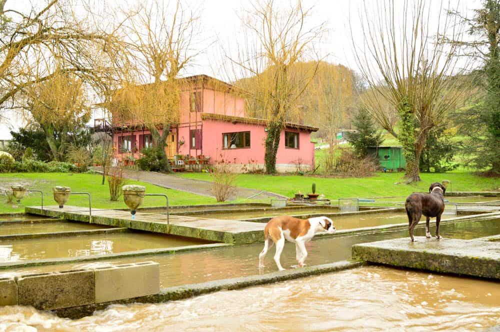 Viajandoconmami-piscifactoria-Saro-Cantabria-pescar-con-niños-viajar-con-niños-planes-con-niños-viajar-travel-6