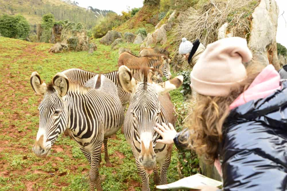 Viajandoconmammi-Viajar-con-niños-Vacaciones-familia-Parque-Cabárceno-Cantabria