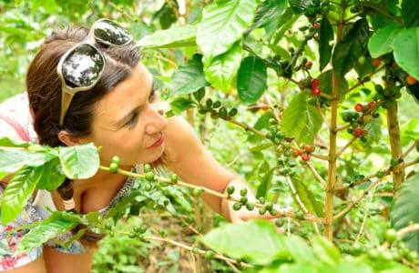 La ruta verde del Café en Ceará. Brasil sostenible Brasil