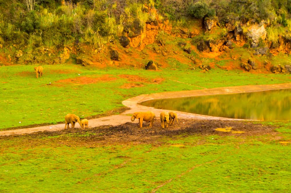 Elefantes de Parque de Cabárceno en Cantabria