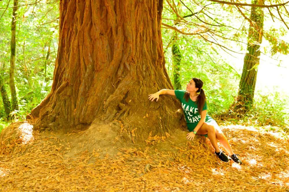 Viajandoconmammi-Viajar-con-niños-Vacaciones-familia-planes-con-niños-Bosque-Secuoyas-Cabezón-de-la-sal-Cantabria-árboles-